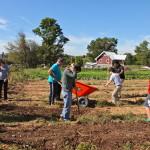 Volunteers_Compost