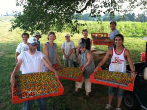 Cherry Tomato Harvest 2011