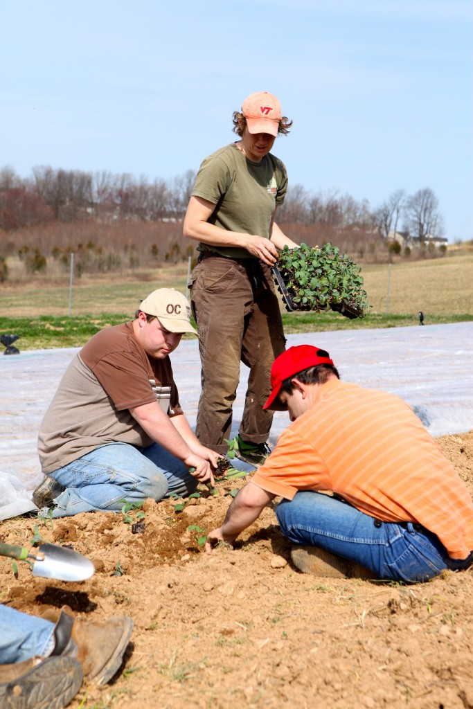 Former Farm Manager Andrea Barnhart oversees planting with Growers Steve & Nuno.