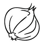 onion-01-01