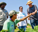 Gerardo Patron harvesting with Growers at Red Wiggler Community Farm.
