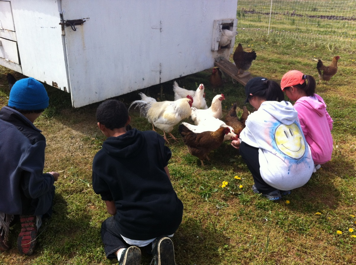 Kids and chickens by chicken house